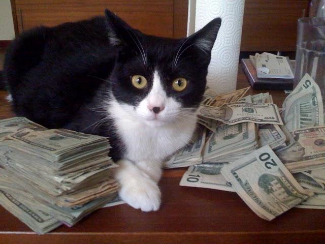 Broker'ları Geçen Kedi Yatırımda Birinci Oldu